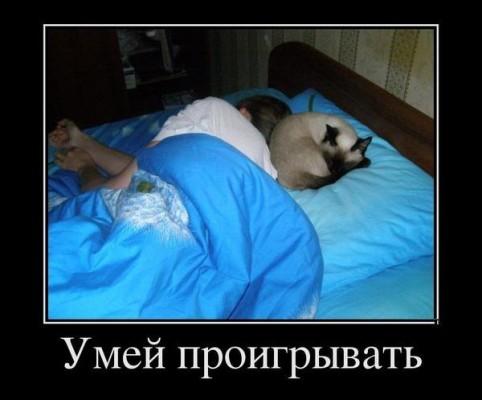 умей проигрывать коту