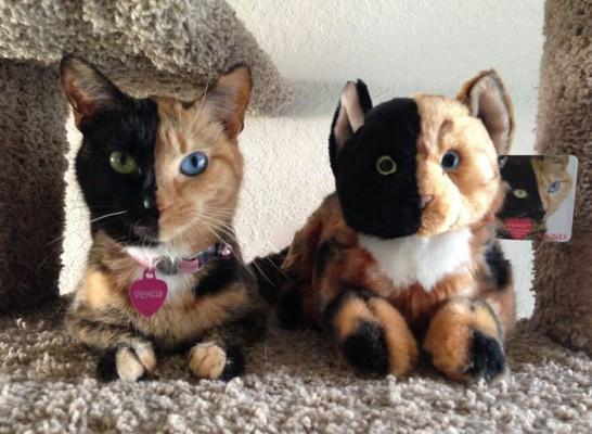 кошка Венера и близнец