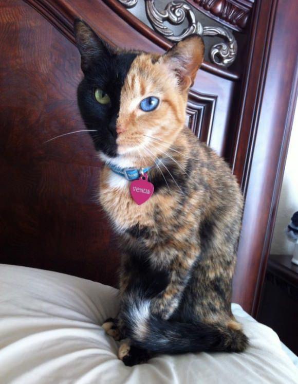 Эта необычная кошка живет в америке