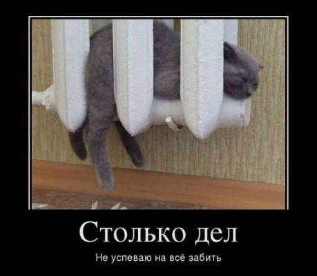 кот в батарее
