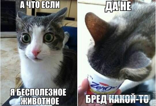 кот бесполезное животное