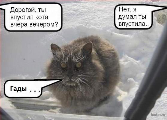 дорогая, ты впустила кота