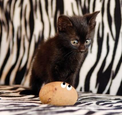 котенок глядит на яйцо