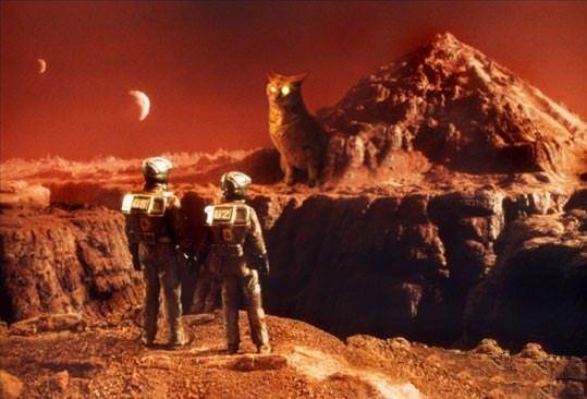 кот на марсе