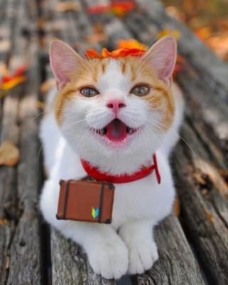 кошка улыбка