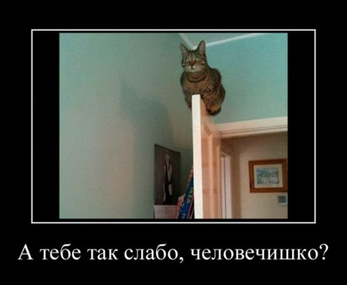 слабо как коту
