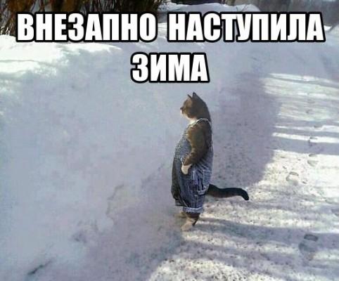 кот и внезапно зима