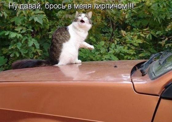 брось в кота кирпичем
