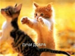 foto-kotyat-luchi-dobra-250