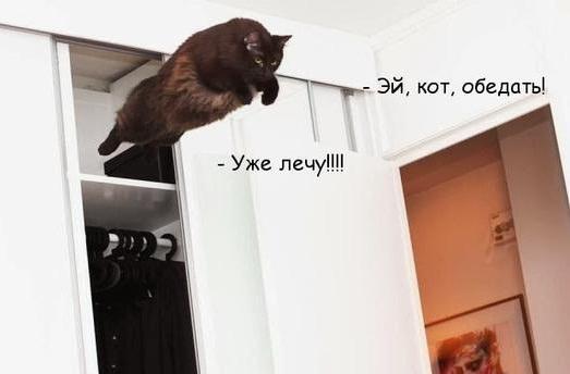 кот летит со шкафа