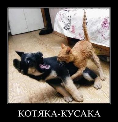 котяка кусака