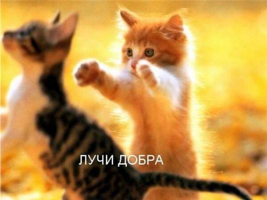 котенок посылает лучи добра