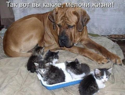 котята мелочи жизни