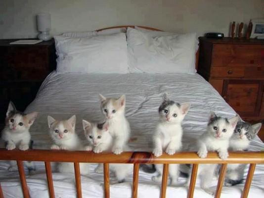 Котятки на кроватке