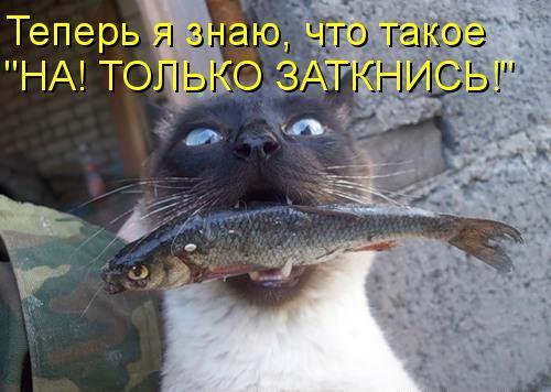 кот с рыбой во рту