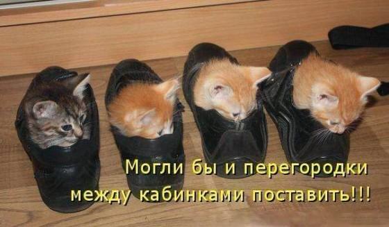 Кабинки для котят