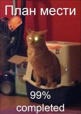 план мести кота