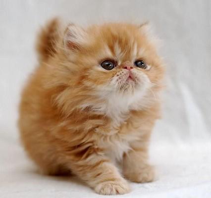котенок хвост трубой