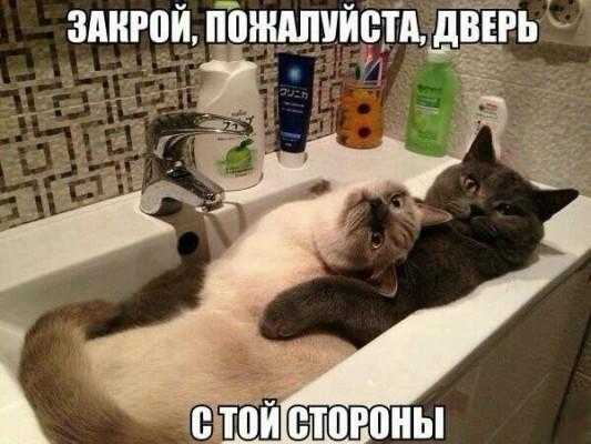 кот с кошкой обнимаются