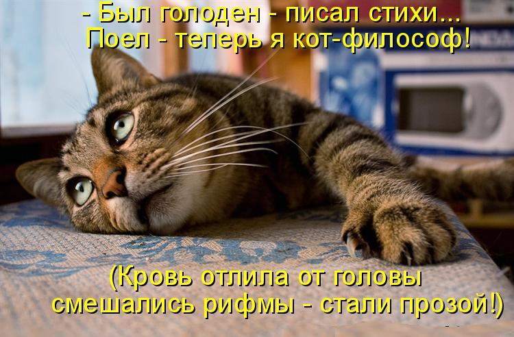 Кот стихи короткие