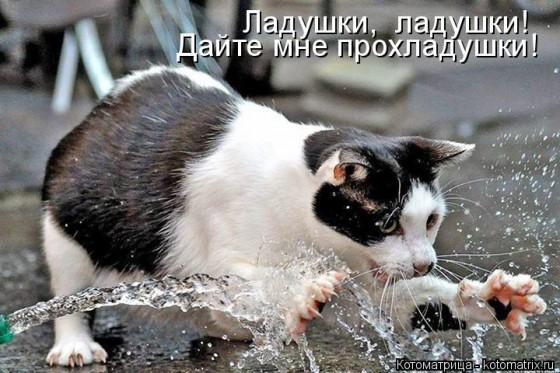 кот играет с водой