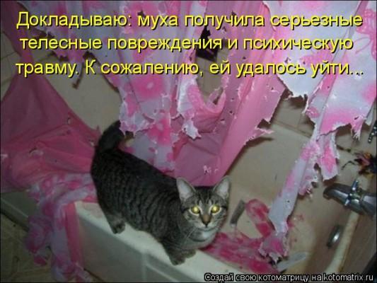 кот и розовые бумажки