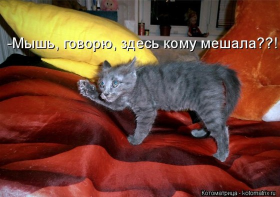 котоматрица - а мышь кому мешала?