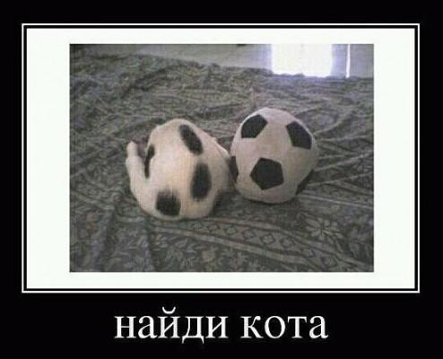 кот как футбольный мяч