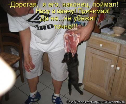 поймал кота на мясо