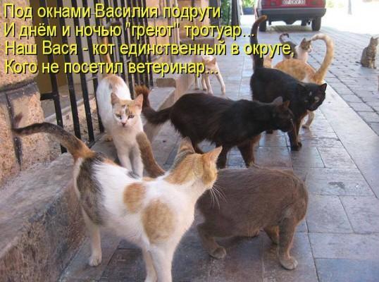 стих про настоящего кота Василия
