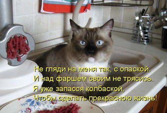 кот в мойке