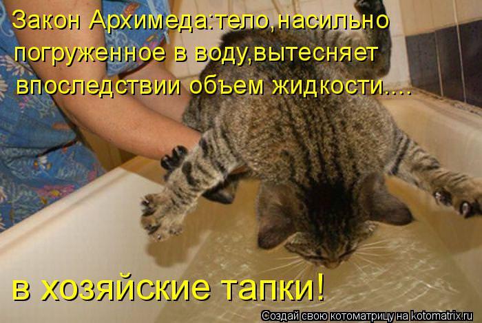 Смешные картинки про кошек с надписями до слёз