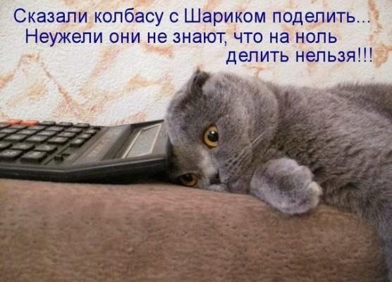 кот с калькулятором