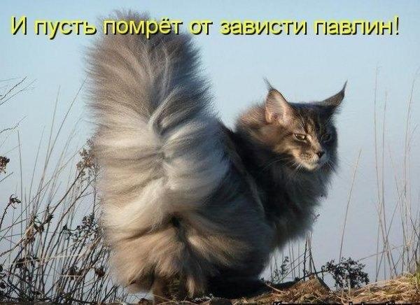 Фото собака вк