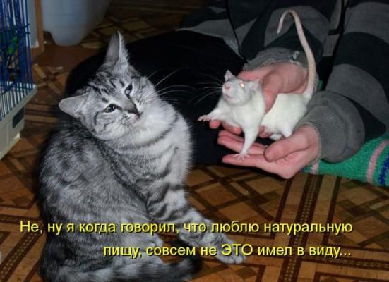 натуральная еда мышь