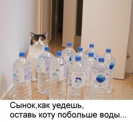 оставь коту воды прикол