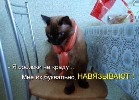 сосиски навязывают коту