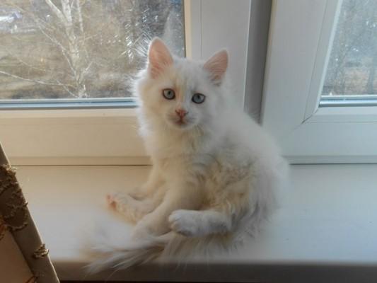 кошка Сара