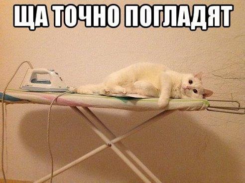 Щас точно погладят кота