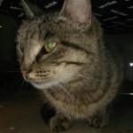 котик обжора из Владивостока