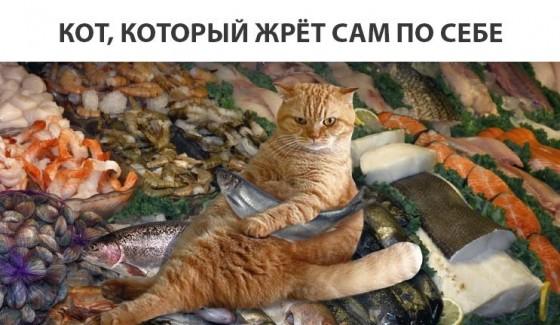 кот который жрет сам по себе