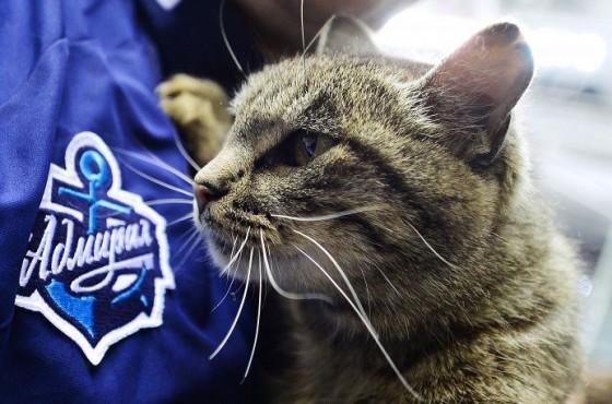 кот Матроскин талисман хоккейного клуба