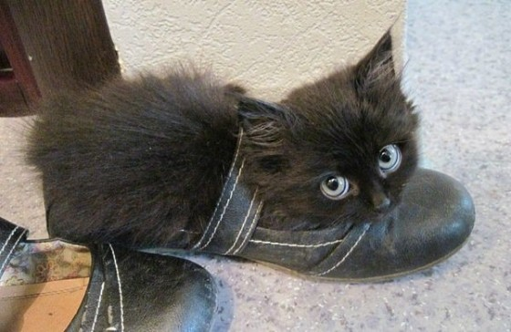 черненький котенок в туфле