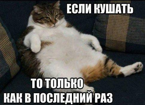 объевшийся кот