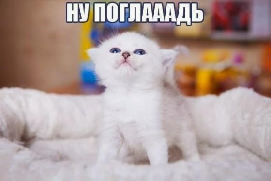 погладь котенка
