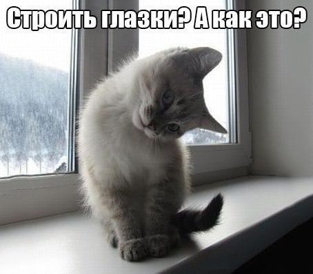 котенок строит глазки