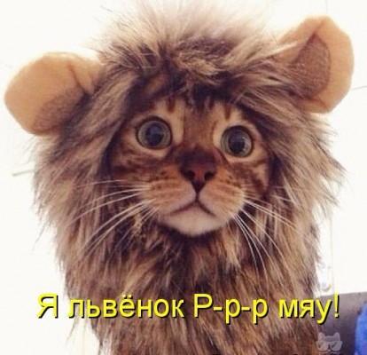 львенок ррр-мяу
