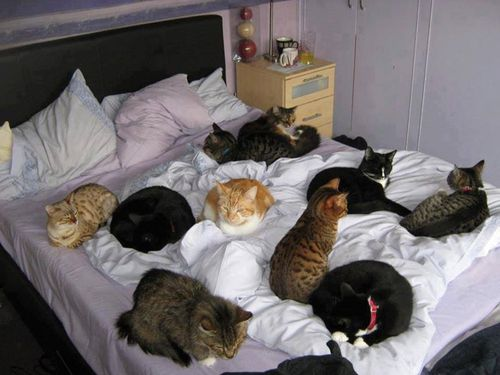много котов на кровати