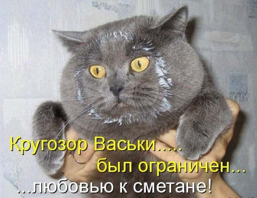 кругозор кота в сметане
