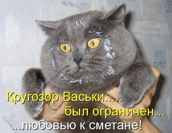 Смешные стихотворения про котов